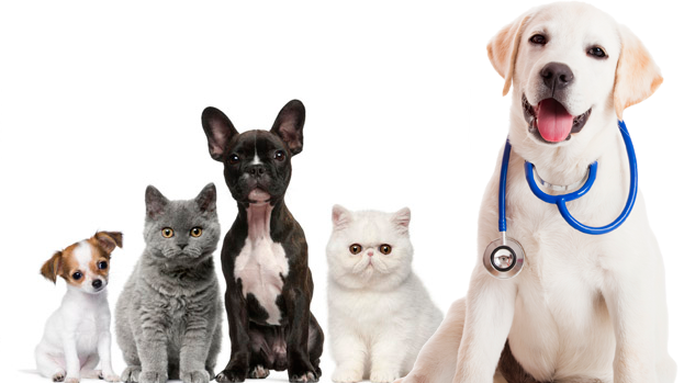 Fear Free Veterinary Visits - Janesville Veterinary Clinic