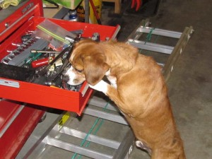 Scooter the dog checking out Dad's tools