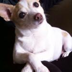 Zoe the Dog