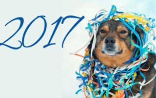 2017 New Year Pet Resolution