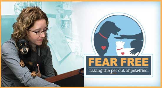 Fear Free Veterinary Practice