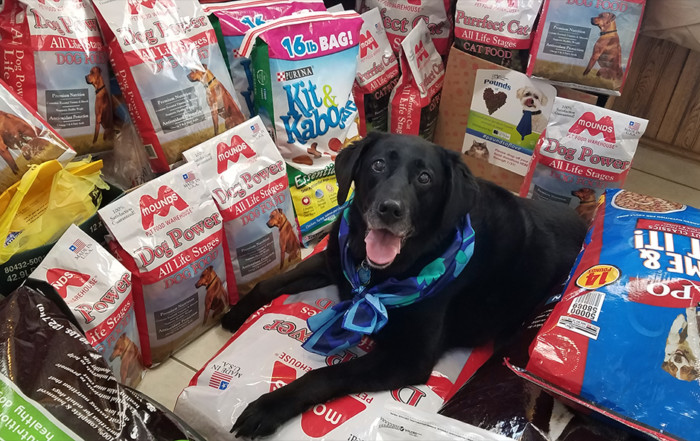 dog with pet food donations