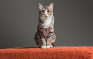 cat on scratched couch