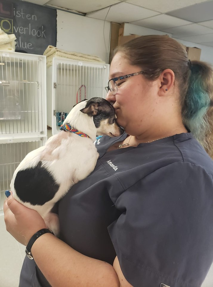 staff using fear-free techniques on pets
